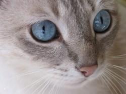 Über das Katzenklo